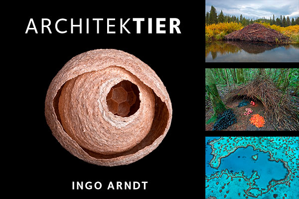 Ingo Arndt Exhibition Architektier