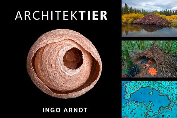 Ingo Arndt Exhibition Architektier