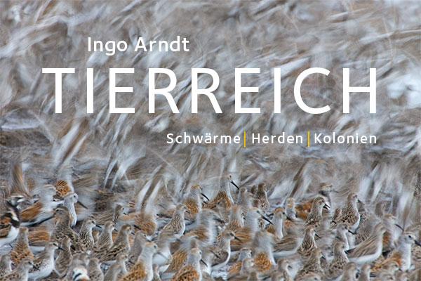 Ingo Arndt Exhibition Tierreich