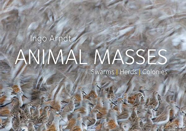 Animal Masses   Ingo Arndt