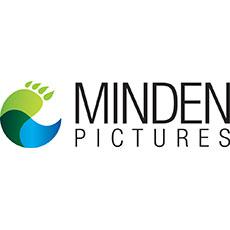 Minden Pictures