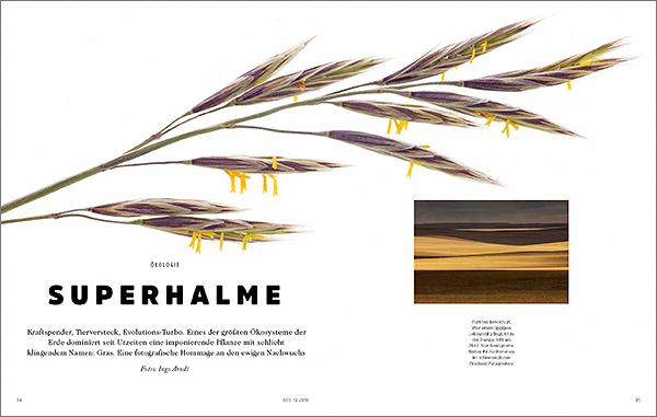GRASART published in GEO Magazine